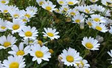 꽃은 우리에게